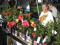 Woman at Hawaii Farmers Market Selling Locally-Grown Flowers