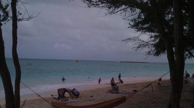 A hammock strung between 2 trees near the beach