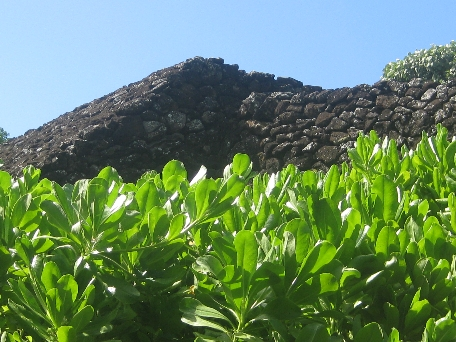A rock wall behind shrubbery