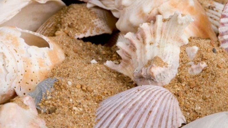 Sea shells as souvenirs of a Hawaii vacation