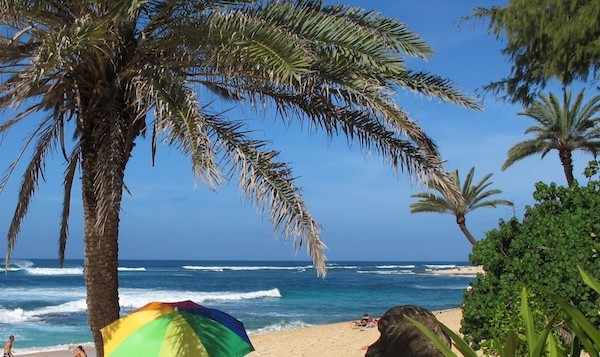 View of a beach umbrella and palm trees on a Hawaiian Beach