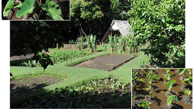 Traditional Hawaiian Farming | Hawaii Aloha Travel