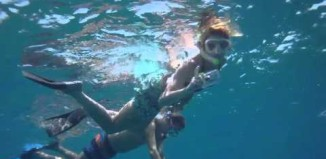 Video thumbnail for youtube video Wild Dolphin Adventure - Hawaii Aloha Travel