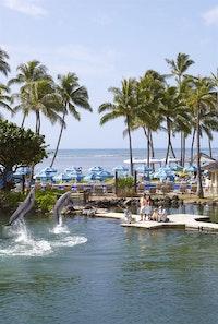 Dolphins jumping at Kahala Hotel