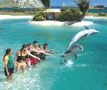 People in swimwear reaching out to jumping dolphins in lagoon