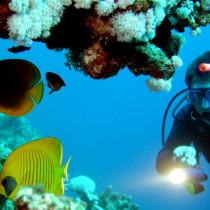 snorkel-scuba-lg_206