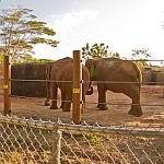 Two elephants eating at Honolulu Zoo