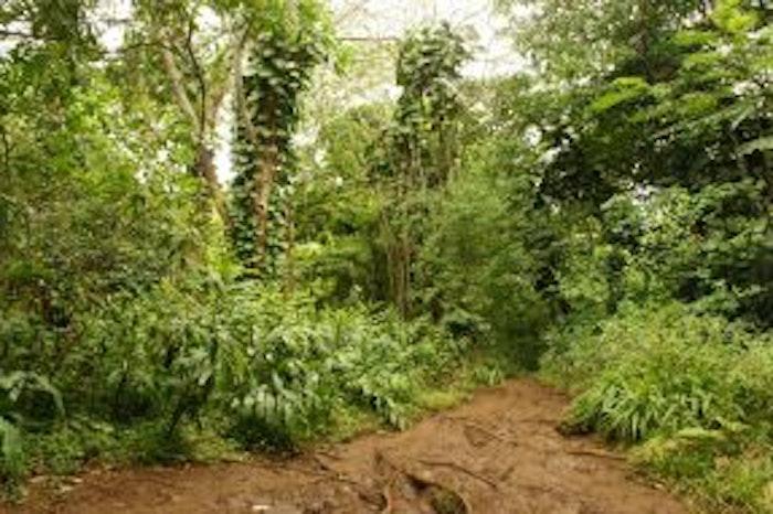 Maunawili Falls Trail Hike