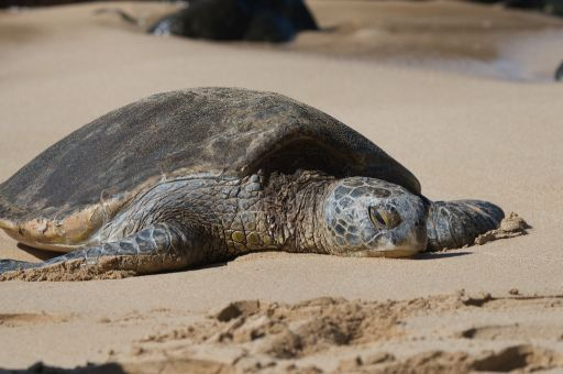 A turtle laying on a beach
