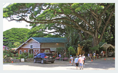 Macadamia Nut Farm Outlet Store