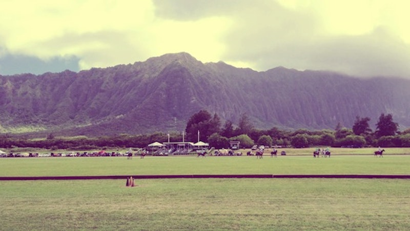 Polo Ponies in Nalo Town