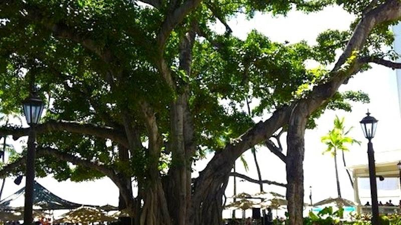 Banyan By the Sea