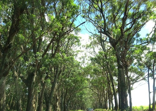 A tree lined road