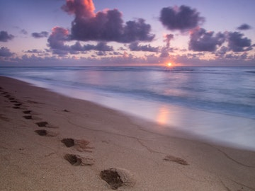 Download our Free Hawaii Vacation eBooks!