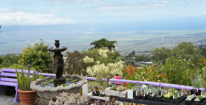 Lavender farm on Kula Maui Tour