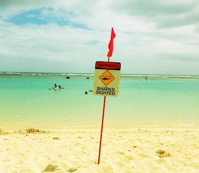 A sign a Ala Moana beach warning swimmers that sharks have been sighted
