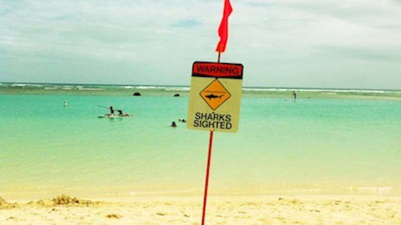 When Are Sharks Likely to Attack in Hawaii?