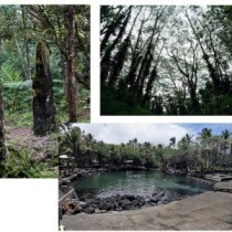 Trees and natural hot springs in Hilo forest