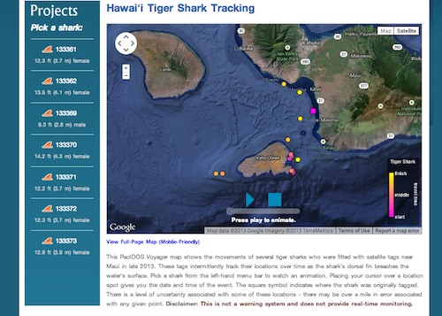 Website showing tiger shark tracking off of Maui waters