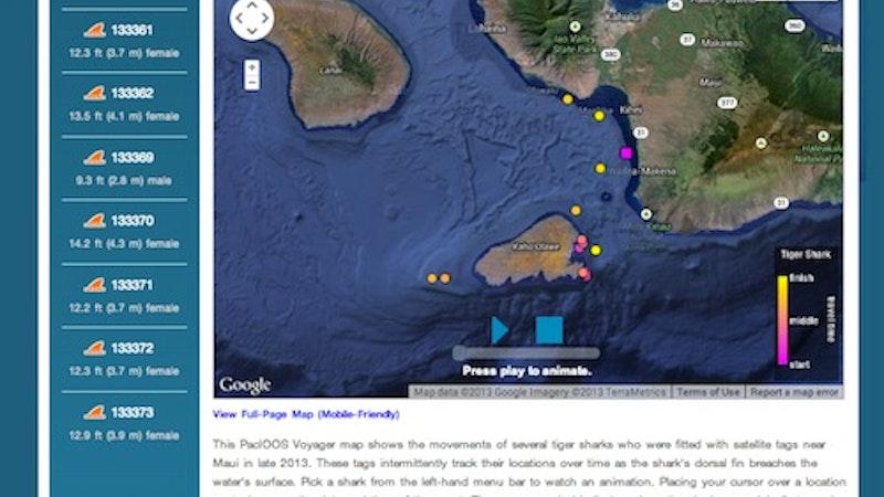 Tracking Tiger Sharks in Hawaii