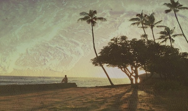 Coconut trees cast shadows during sunset in Hawaii