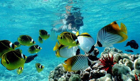 A school of tropical fish swimming around coral reef
