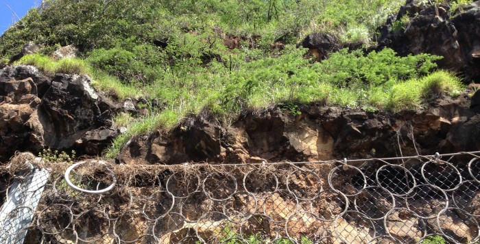A chain-linked fence at Waimea Bay prevents rock debris from falling into the roadway below