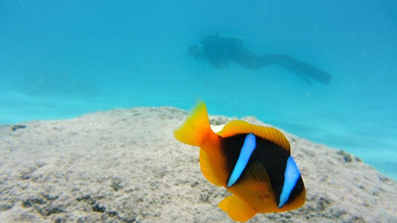 Underwater Guide to Hawaii