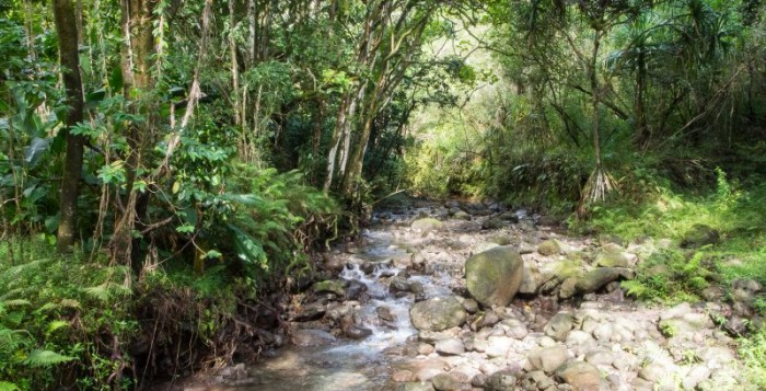 Stream in Waihe'e valley