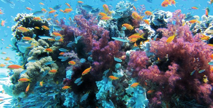 fishes swimming around a coral reef