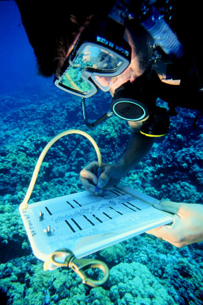 A researcher checks an underwater cecklist