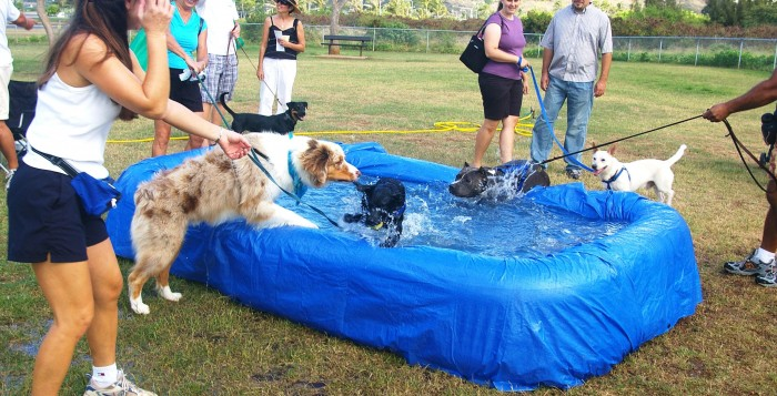 Dogs splashing around in portable pool at dog park in Hawaii