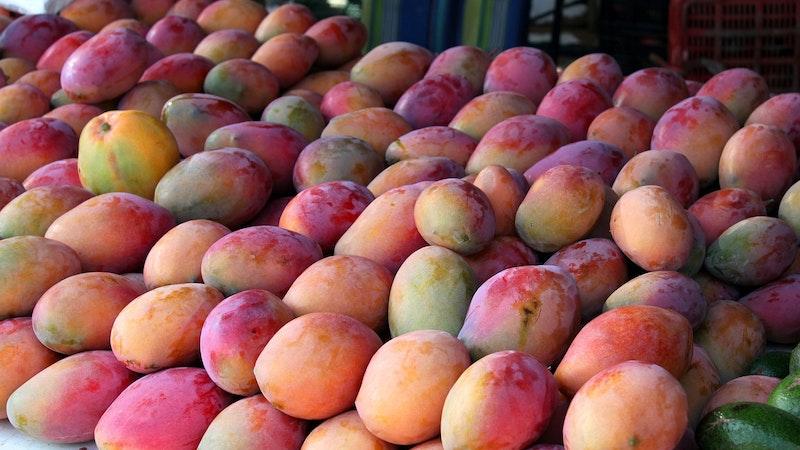 Summertime means mango season in Hawaii