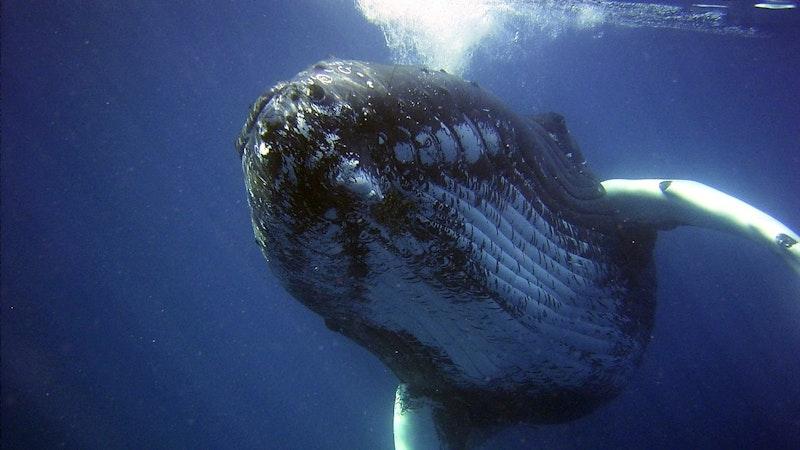 Sighting Endangered Species in Hawaii