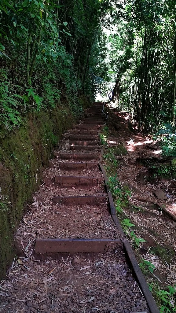 Stairs on a trail in Manoa