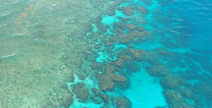 Aerial shot of a reef