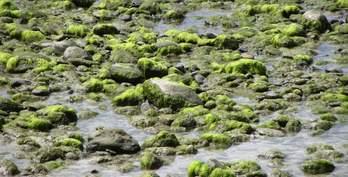 Rocks covered with seaweed