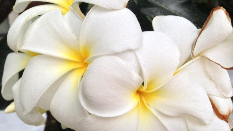 Graduation in hawaii bring flowers hawaii aloha travel graduation in hawaii bring flowers mightylinksfo Image collections