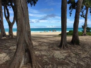ironwood trees at waimanalo