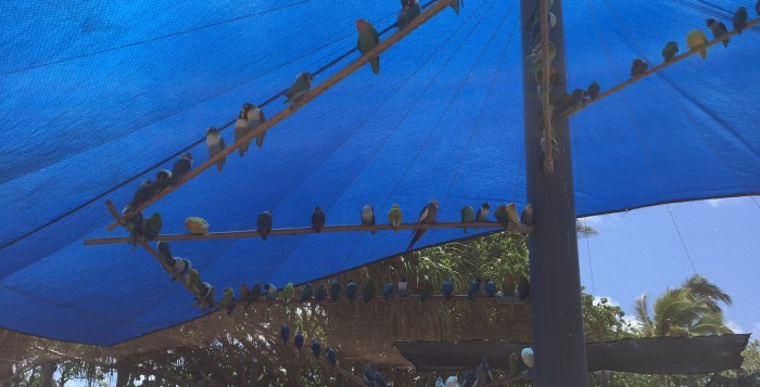 Birds rest under the exhibit's blue tent.