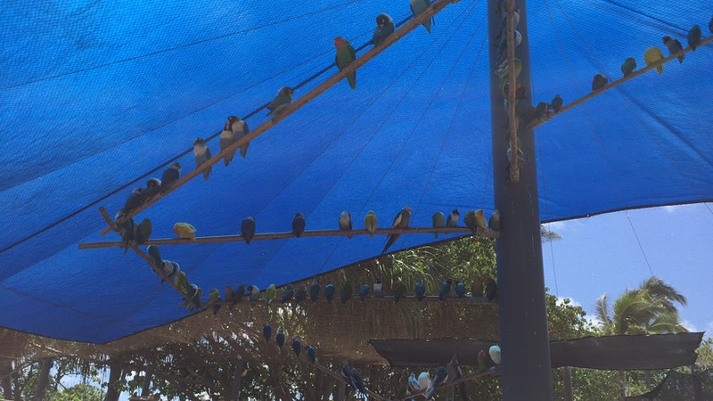 An Aviary for All Ages