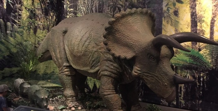 A life-size triceratops greets visitors.