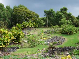 Greenwell Gardens in Kona