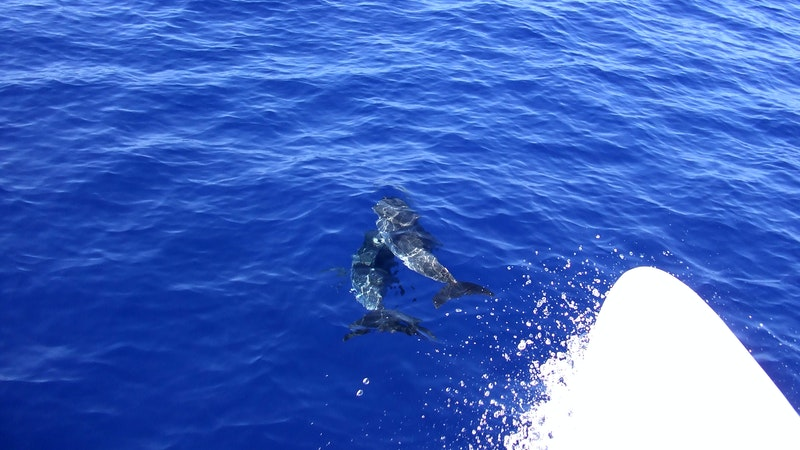 Keep Your Distance Around Dolphins in Hawaii