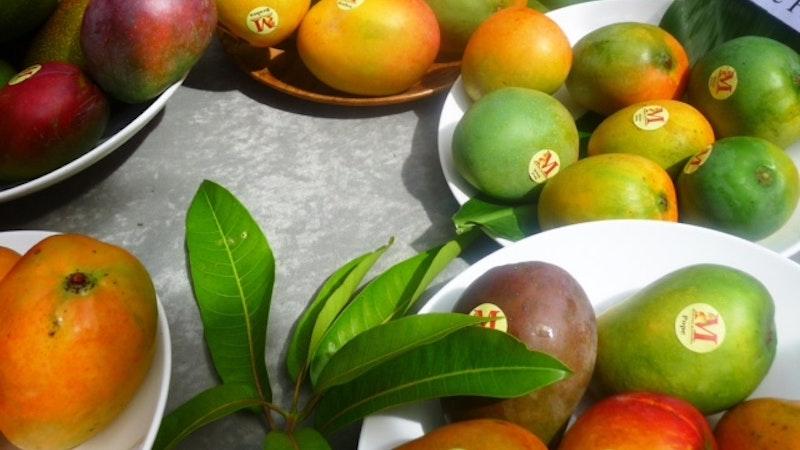 Mango Madness Hits Hawaii