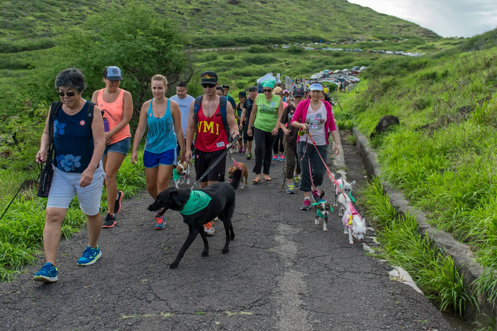 hikers with dogs on the makapuu lighthouse trail