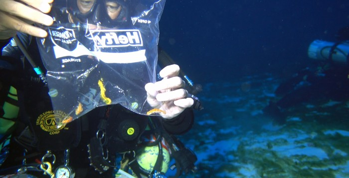 a diver holding up a baggie with a seahorse in it