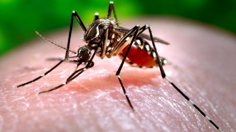 9 Ways to Protect Yourself from Dengue Fever in Hawaii