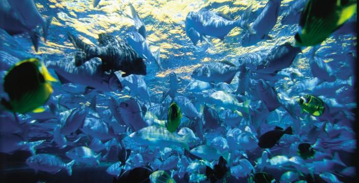 fish near a reef