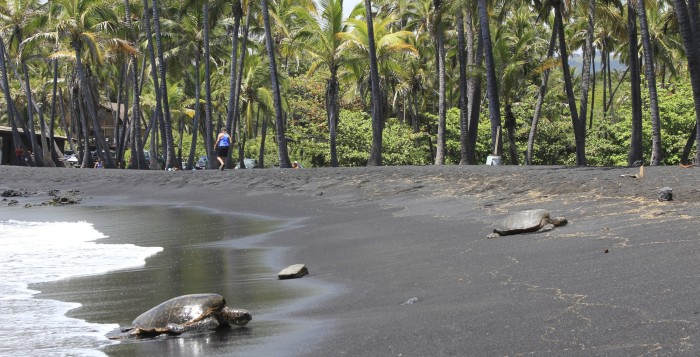 a black sand beach with turtles